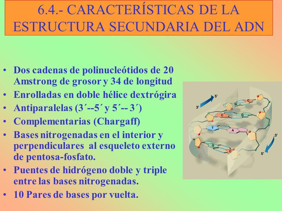 6.4.- CARACTERÍSTICAS DE LA ESTRUCTURA SECUNDARIA DEL ADN