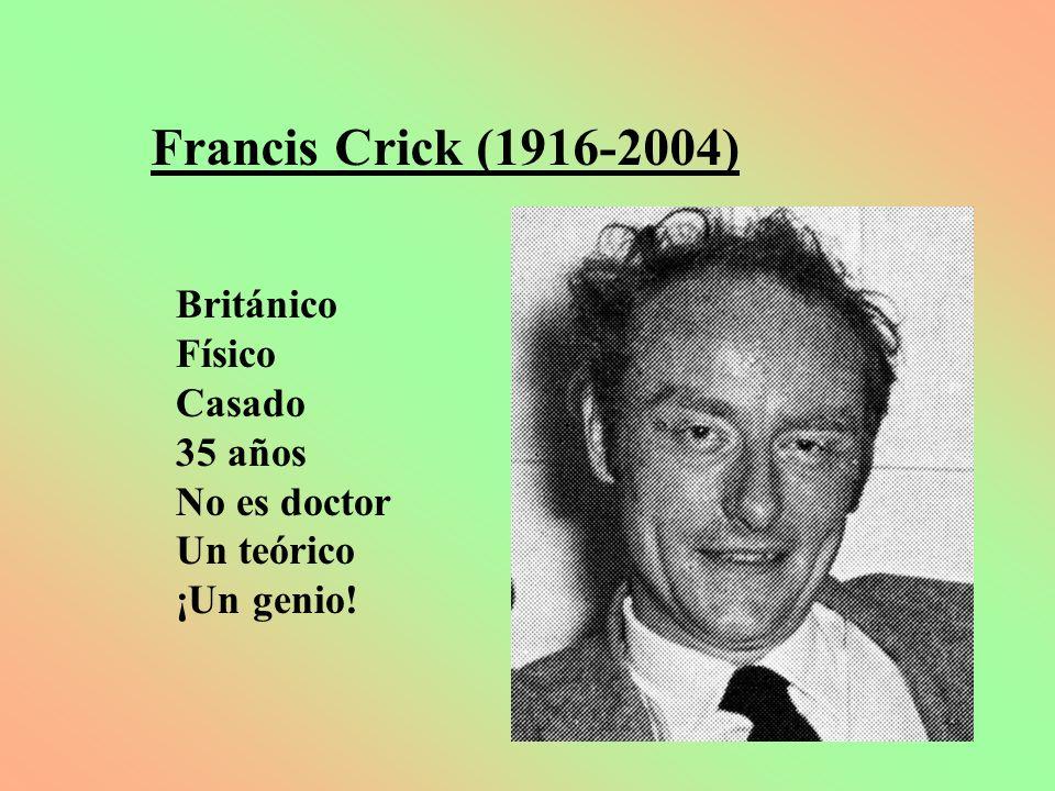Francis Crick (1916-2004) Británico Físico Casado 35 años No es doctor