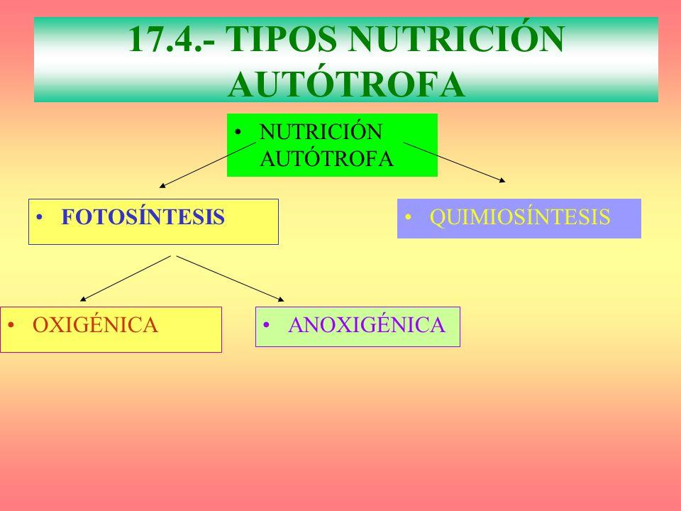 17.4.- TIPOS NUTRICIÓN AUTÓTROFA
