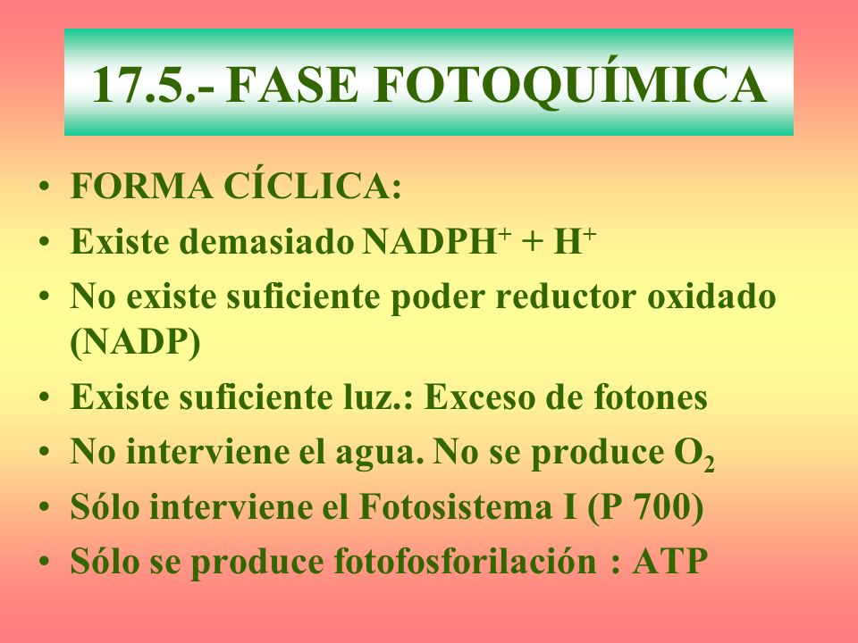 17.5.- FASE FOTOQUÍMICA FORMA CÍCLICA: Existe demasiado NADPH+ + H+