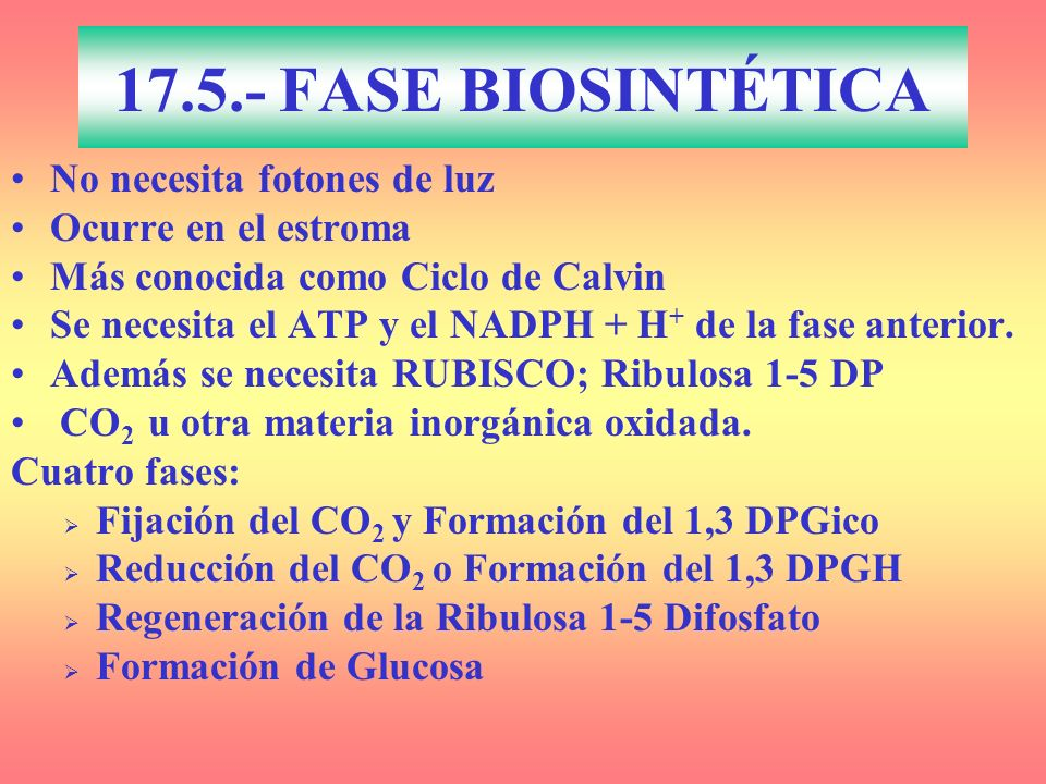 17.5.- FASE BIOSINTÉTICA No necesita fotones de luz