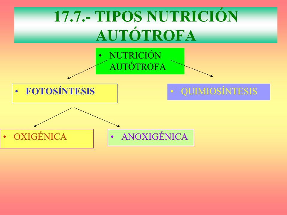 17.7.- TIPOS NUTRICIÓN AUTÓTROFA