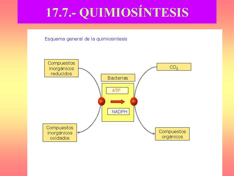 17.7.- QUIMIOSÍNTESIS