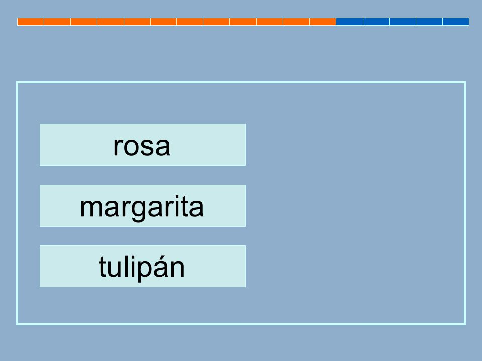 rosa margarita tulipán