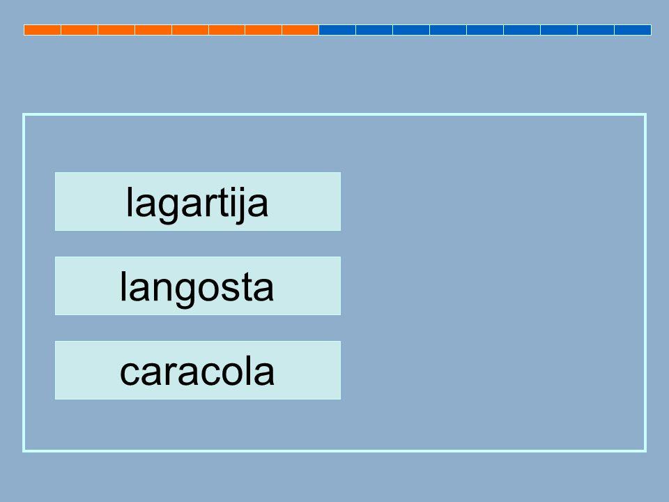 lagartija langosta caracola
