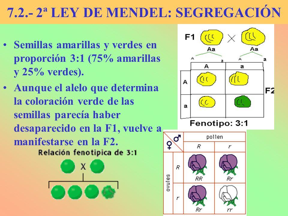 7.2.- 2ª LEY DE MENDEL: SEGREGACIÓN