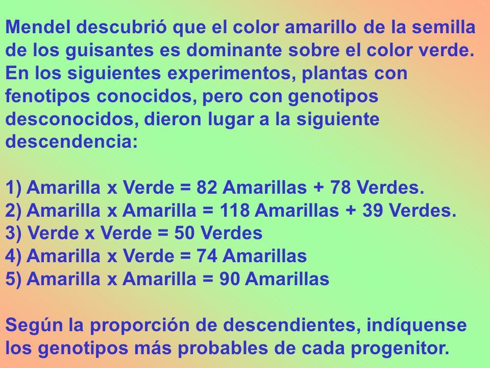 Mendel descubrió que el color amarillo de la semilla de los guisantes es dominante sobre el color verde. En los siguientes experimentos, plantas con fenotipos conocidos, pero con genotipos desconocidos, dieron lugar a la siguiente descendencia: