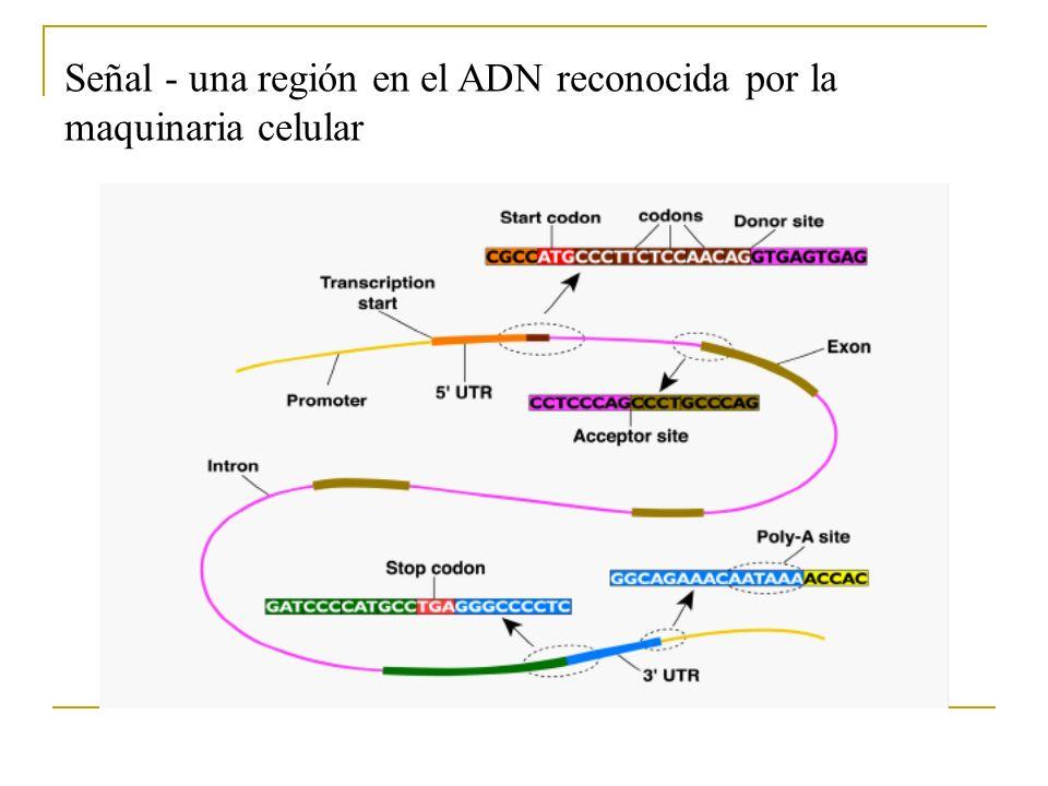 Señal - una región en el ADN reconocida por la maquinaria celular