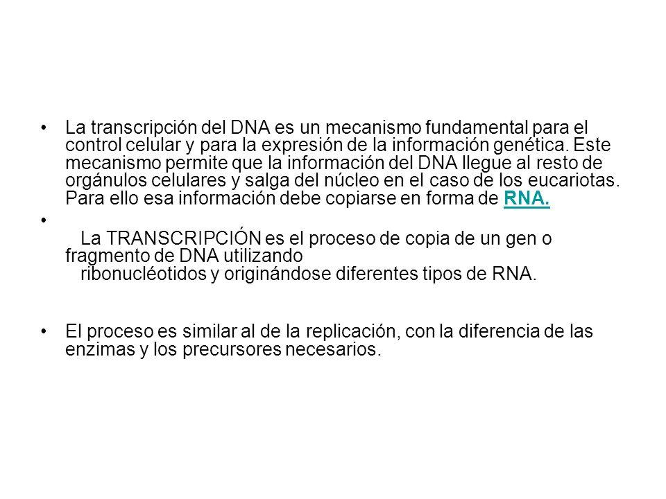 La transcripción del DNA es un mecanismo fundamental para el control celular y para la expresión de la información genética. Este mecanismo permite que la información del DNA llegue al resto de orgánulos celulares y salga del núcleo en el caso de los eucariotas. Para ello esa información debe copiarse en forma de RNA.