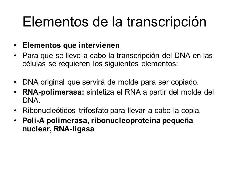 Elementos de la transcripción