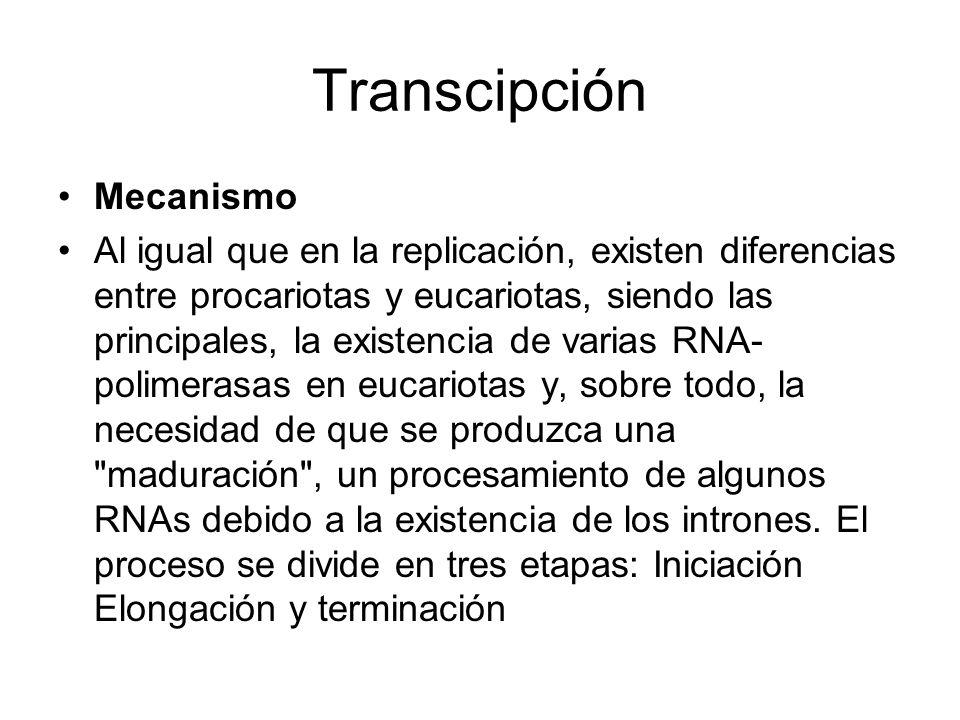 Transcipción Mecanismo