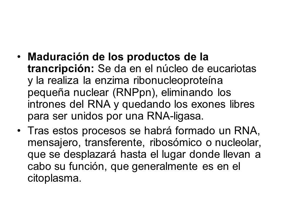 Maduración de los productos de la trancripción: Se da en el núcleo de eucariotas y la realiza la enzima ribonucleoproteína pequeña nuclear (RNPpn), eliminando los intrones del RNA y quedando los exones libres para ser unidos por una RNA-ligasa.