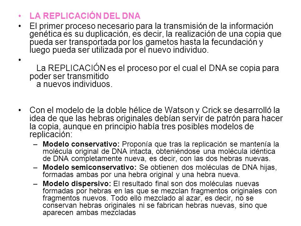 LA REPLICACIÓN DEL DNA