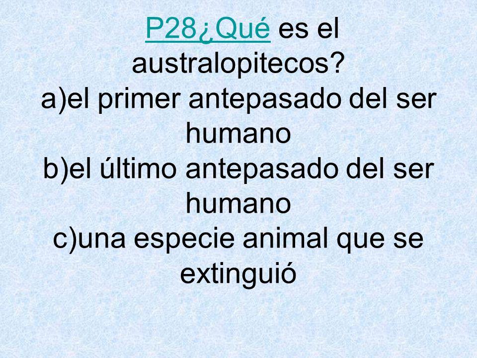 P28¿Qué es el australopitecos