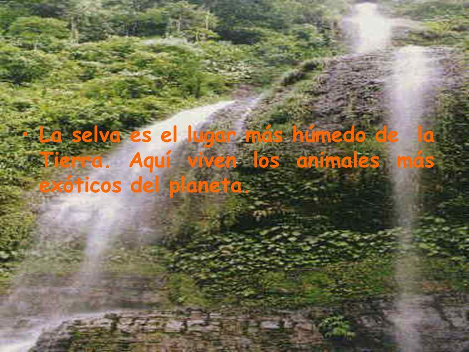 La selva es el lugar más húmedo de la Tierra