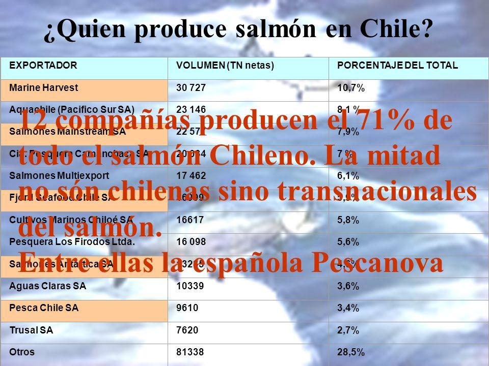 12 compañías producen el 71% de todo el salmón Chileno. La mitad