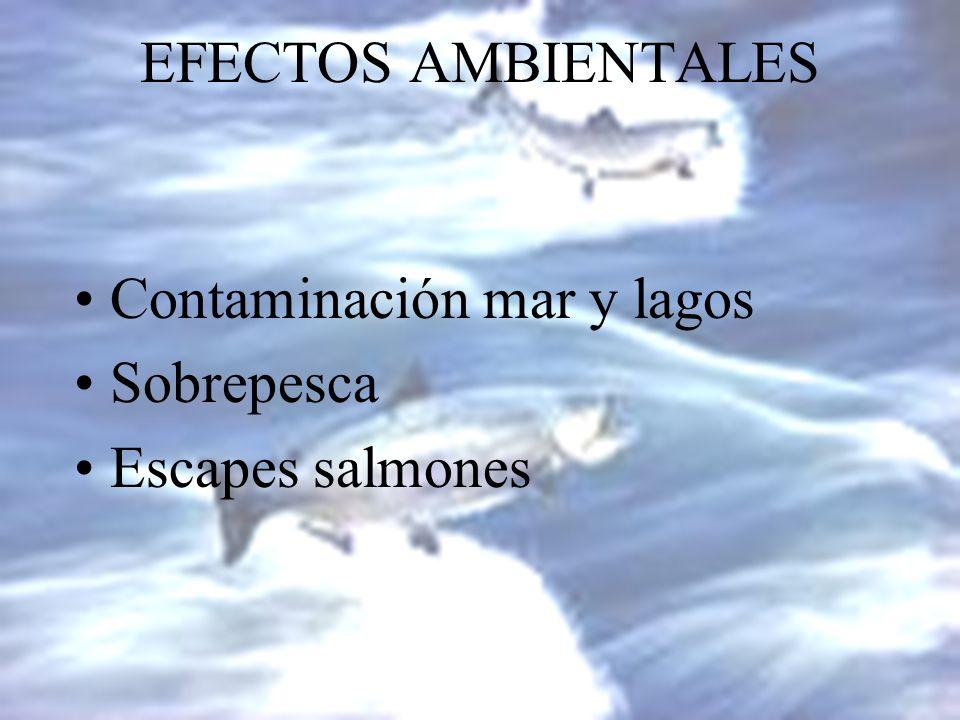 Contaminación mar y lagos Sobrepesca Escapes salmones