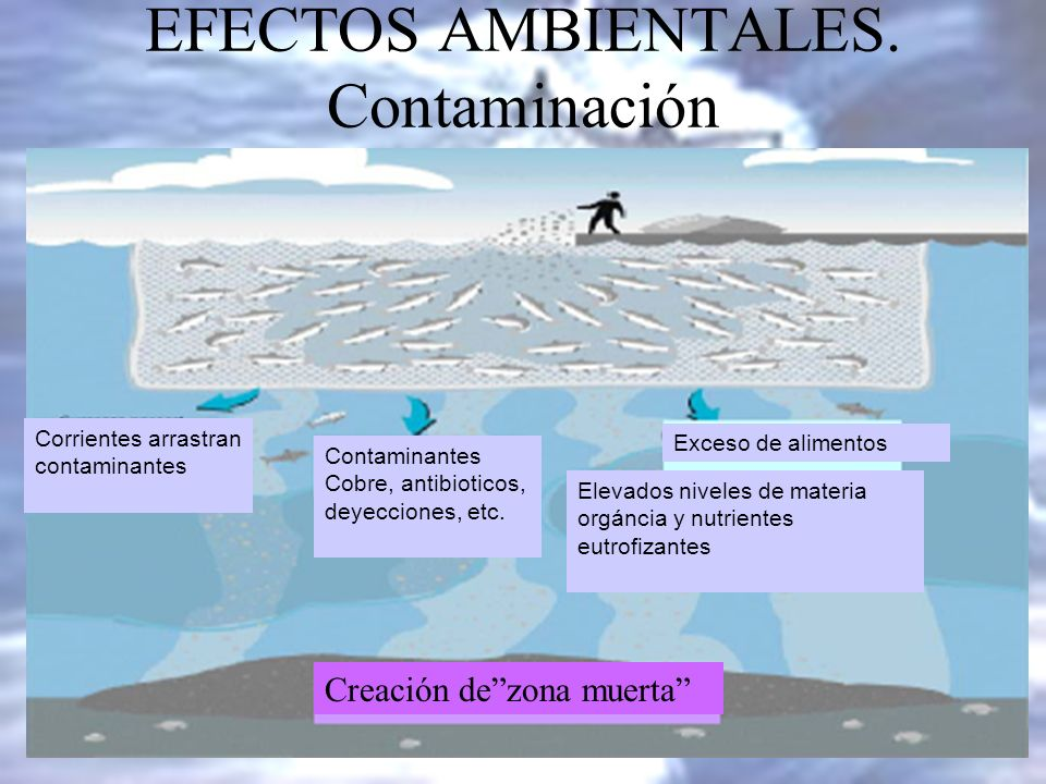 EFECTOS AMBIENTALES. Contaminación