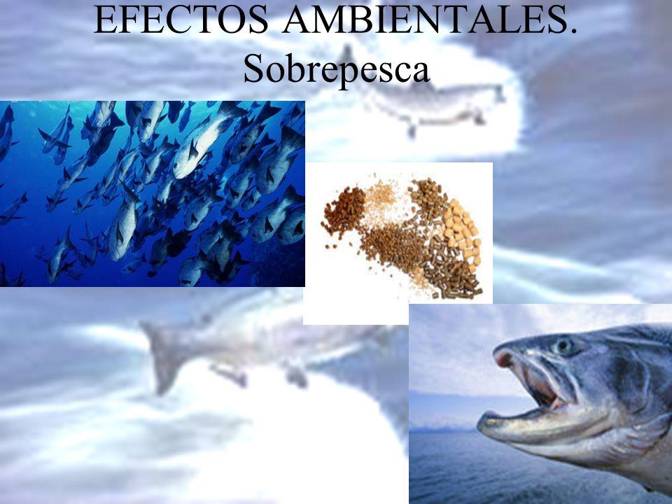 EFECTOS AMBIENTALES. Sobrepesca