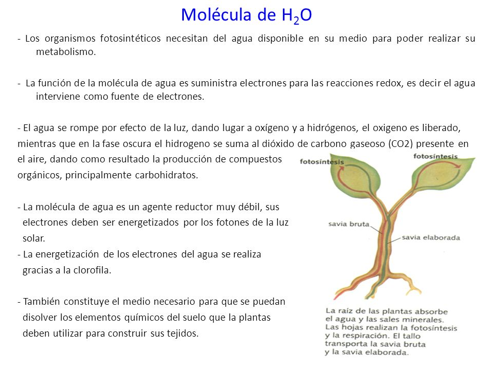 Molécula de H2O