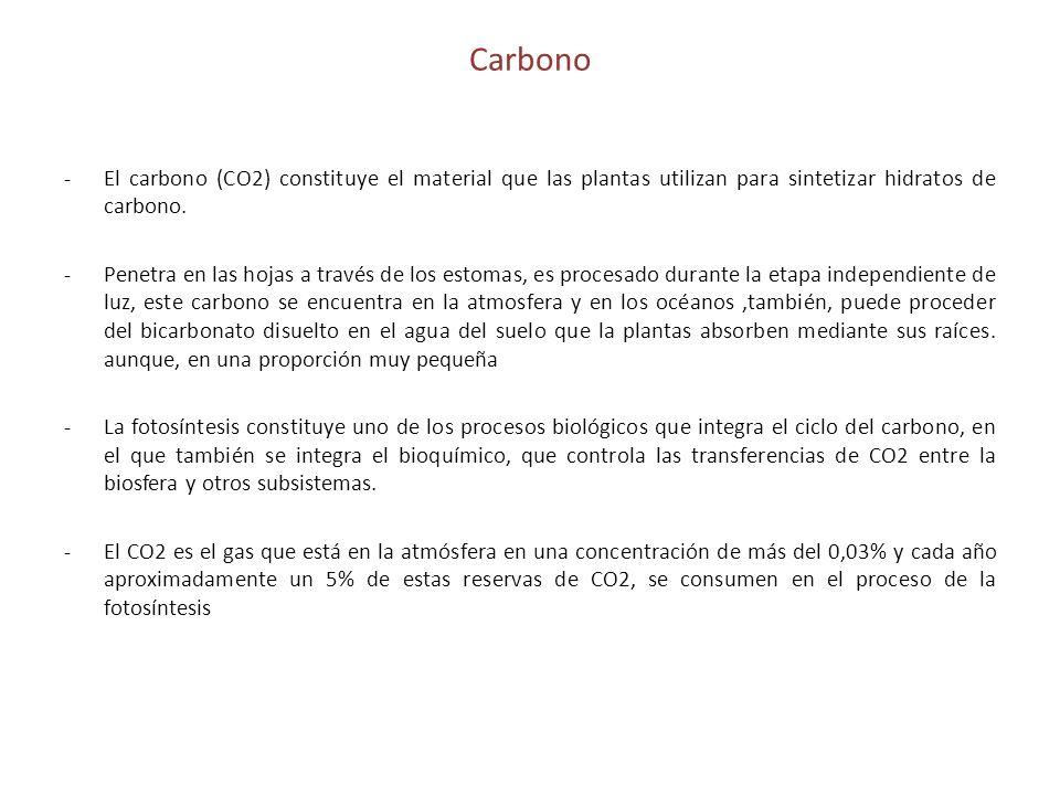 CarbonoEl carbono (CO2) constituye el material que las plantas utilizan para sintetizar hidratos de carbono.