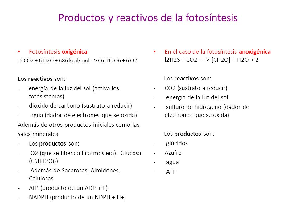 Productos y reactivos de la fotosíntesis