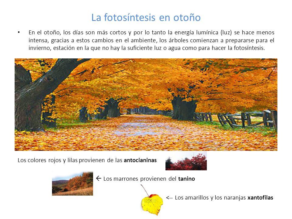 La fotosíntesis en otoño