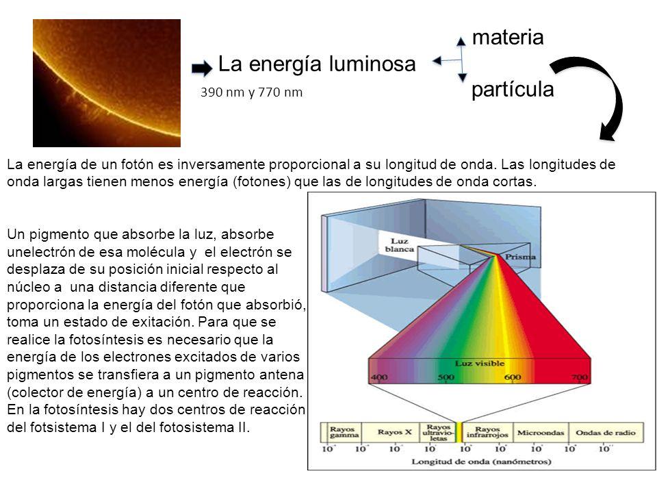 materia La energía luminosa 390 nm y 770 nm partícula La energía de un fotón es inversamente proporcional a su longitud de onda.