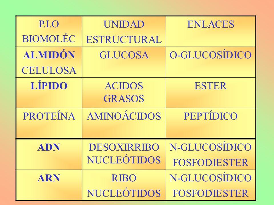 DESOXIRRIBONUCLEÓTIDOS