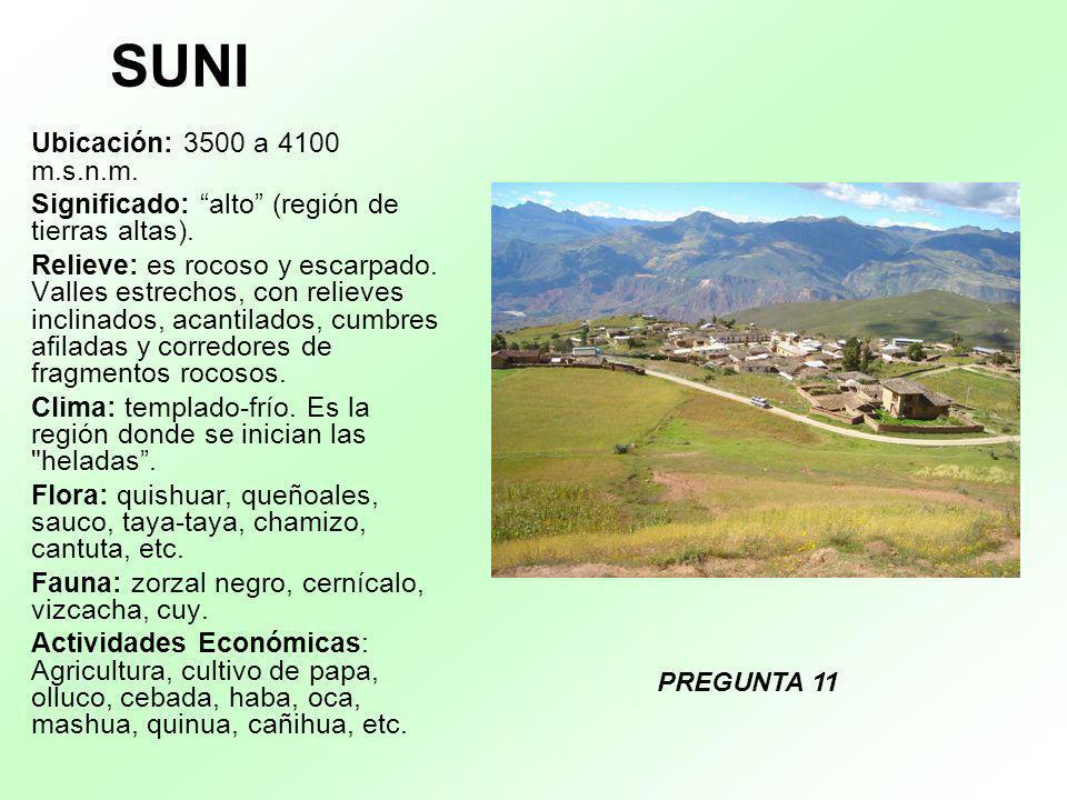 SUNI Ubicación: 3500 a 4100 m.s.n.m. Significado: alto (región de tierras altas).