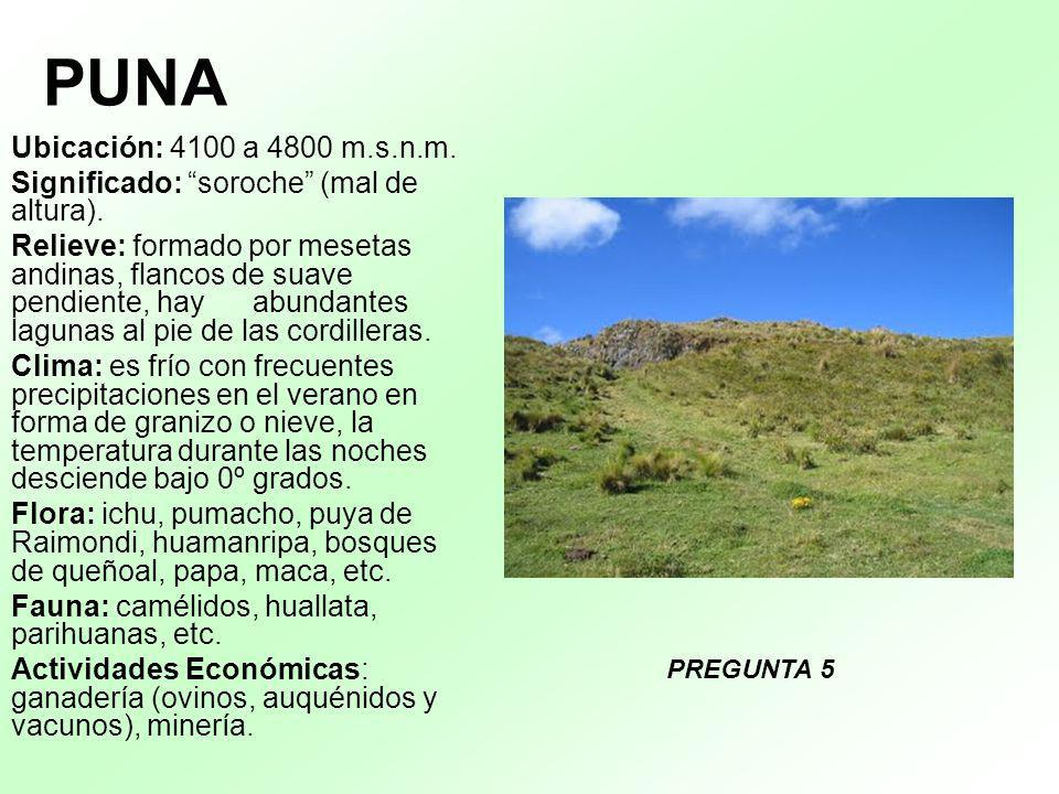 PUNA Ubicación: 4100 a 4800 m.s.n.m. Significado: soroche (mal de altura).