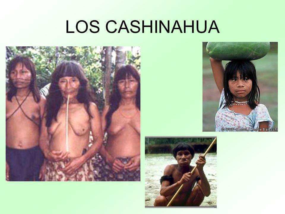LOS CASHINAHUA