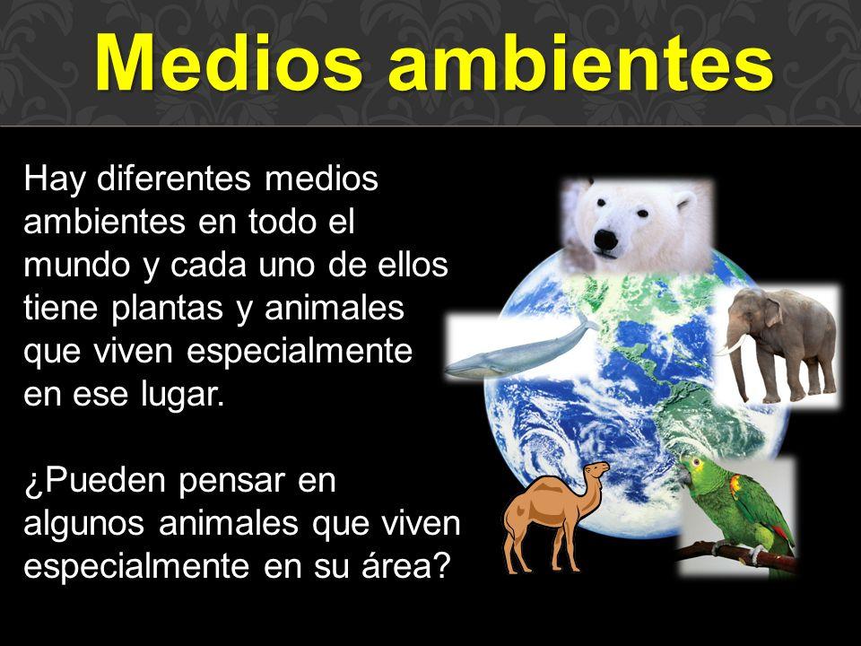 Medios ambientes Hay diferentes medios ambientes en todo el mundo y cada uno de ellos tiene plantas y animales que viven especialmente en ese lugar.