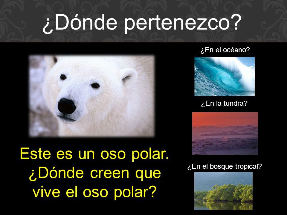 Este es un oso polar. ¿Dónde creen que vive el oso polar