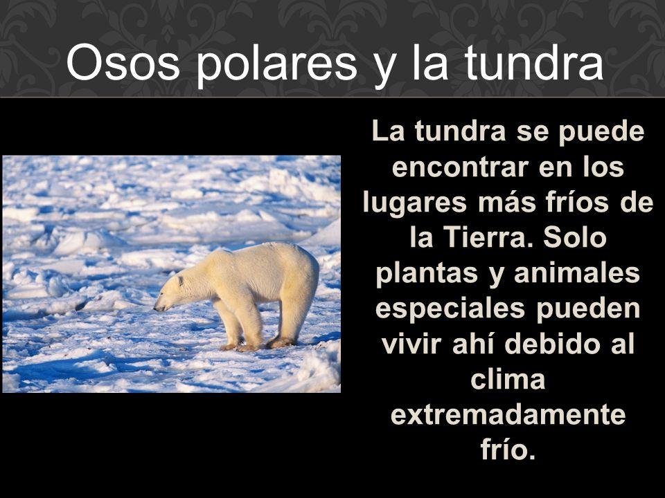 Osos polares y la tundra