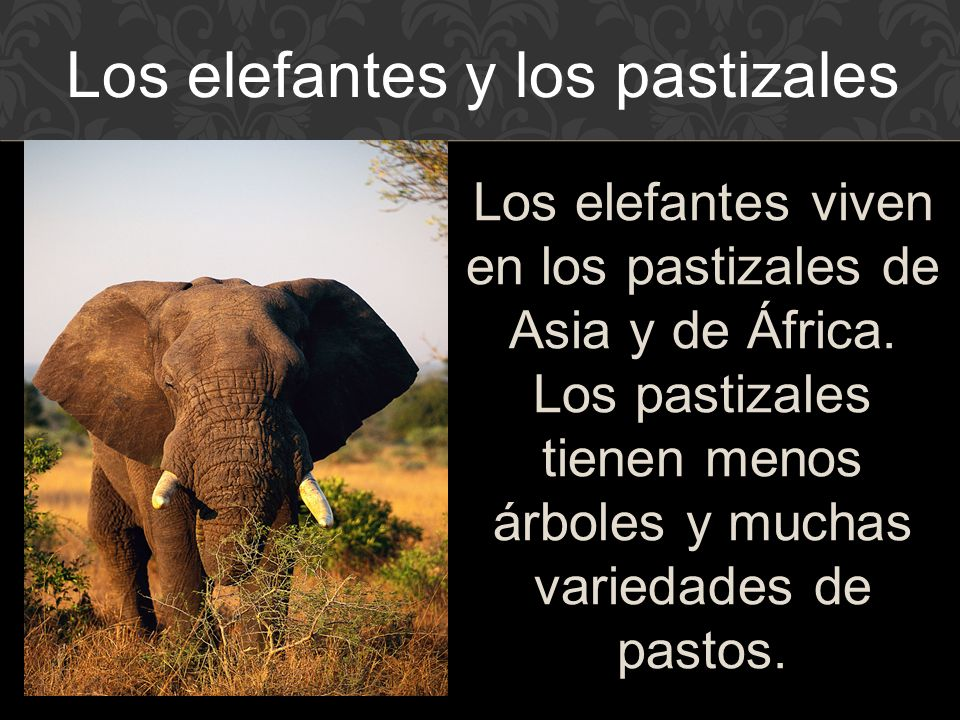 Los elefantes y los pastizales