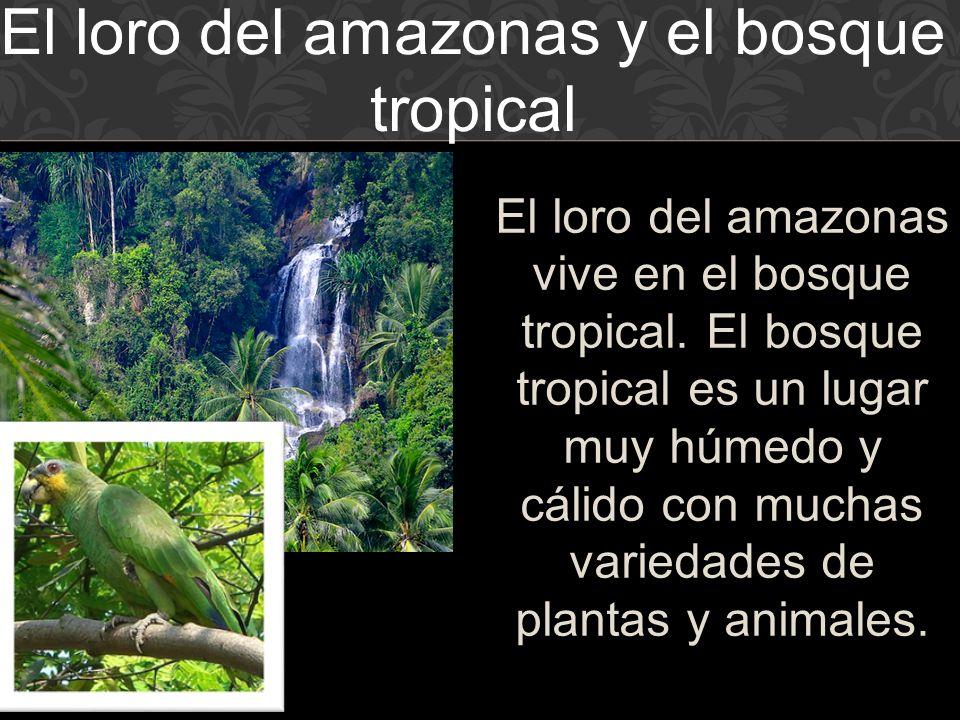 El loro del amazonas y el bosque tropical
