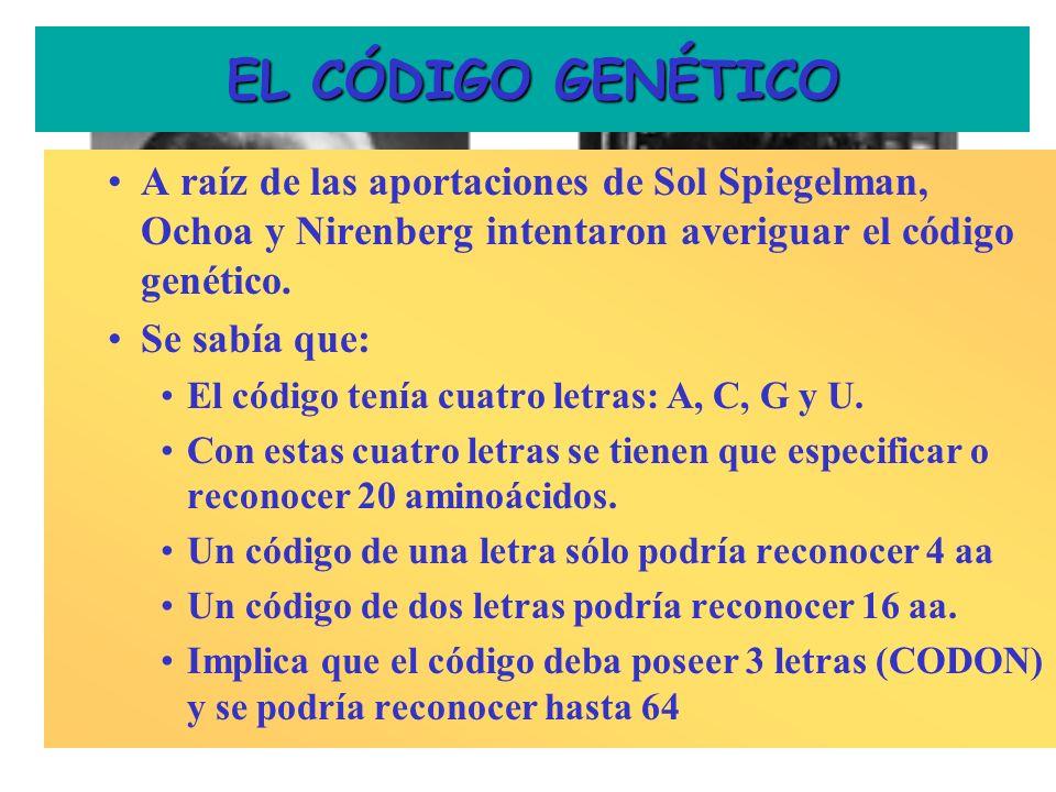 EL CÓDIGO GENÉTICO A raíz de las aportaciones de Sol Spiegelman, Ochoa y Nirenberg intentaron averiguar el código genético.
