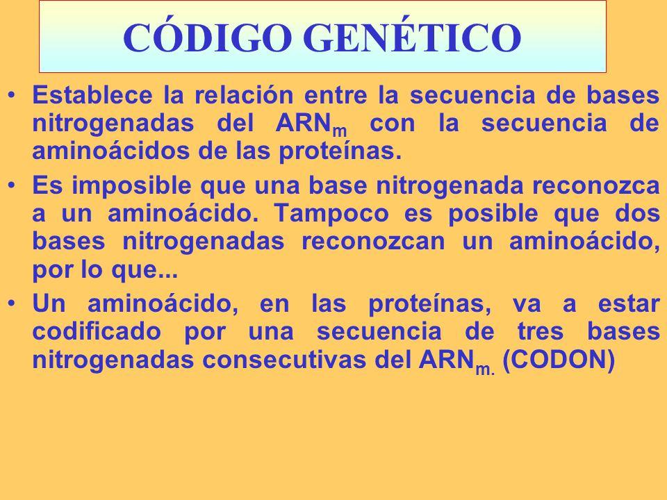 CÓDIGO GENÉTICOEstablece la relación entre la secuencia de bases nitrogenadas del ARNm con la secuencia de aminoácidos de las proteínas.