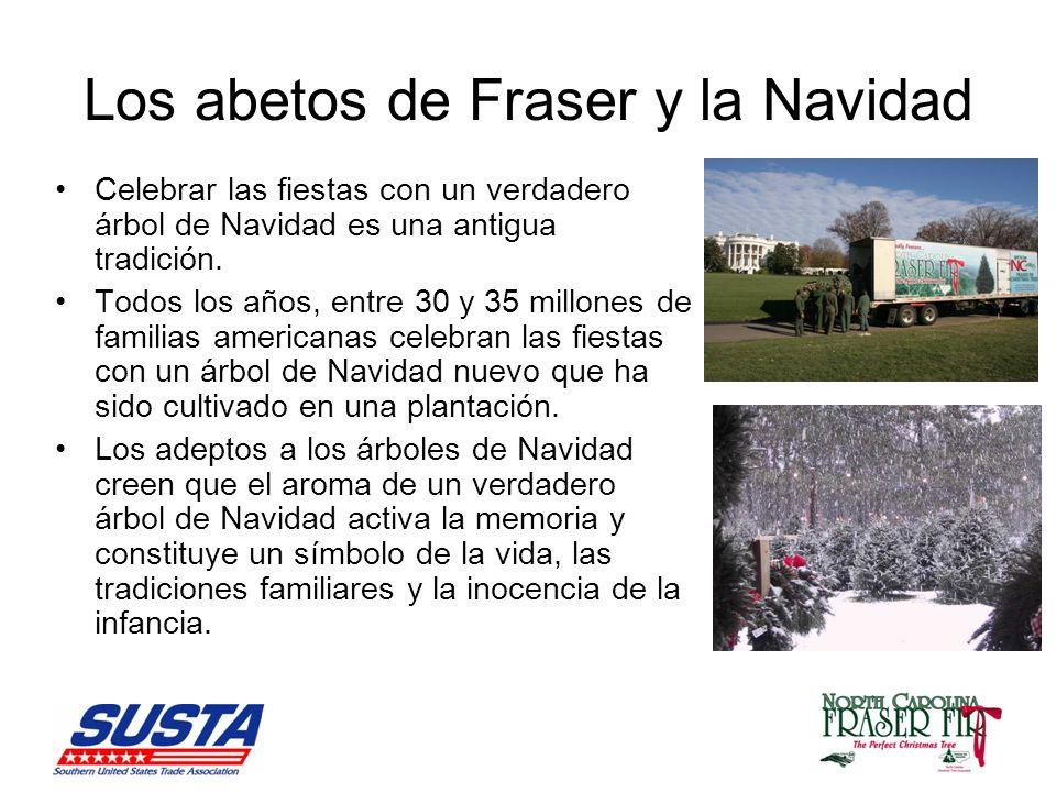 Los abetos de Fraser y la Navidad