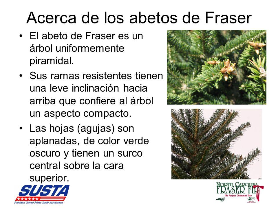 Acerca de los abetos de Fraser