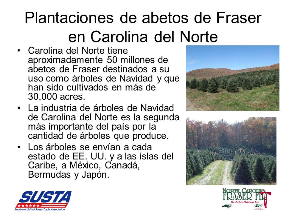 Plantaciones de abetos de Fraser en Carolina del Norte
