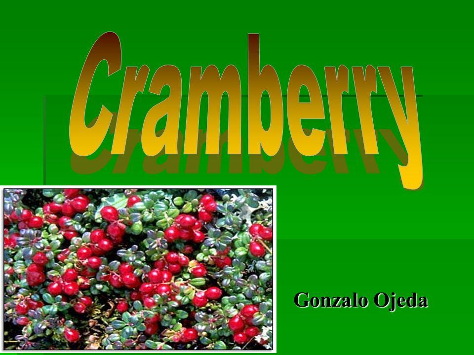 Cramberry Gonzalo Ojeda