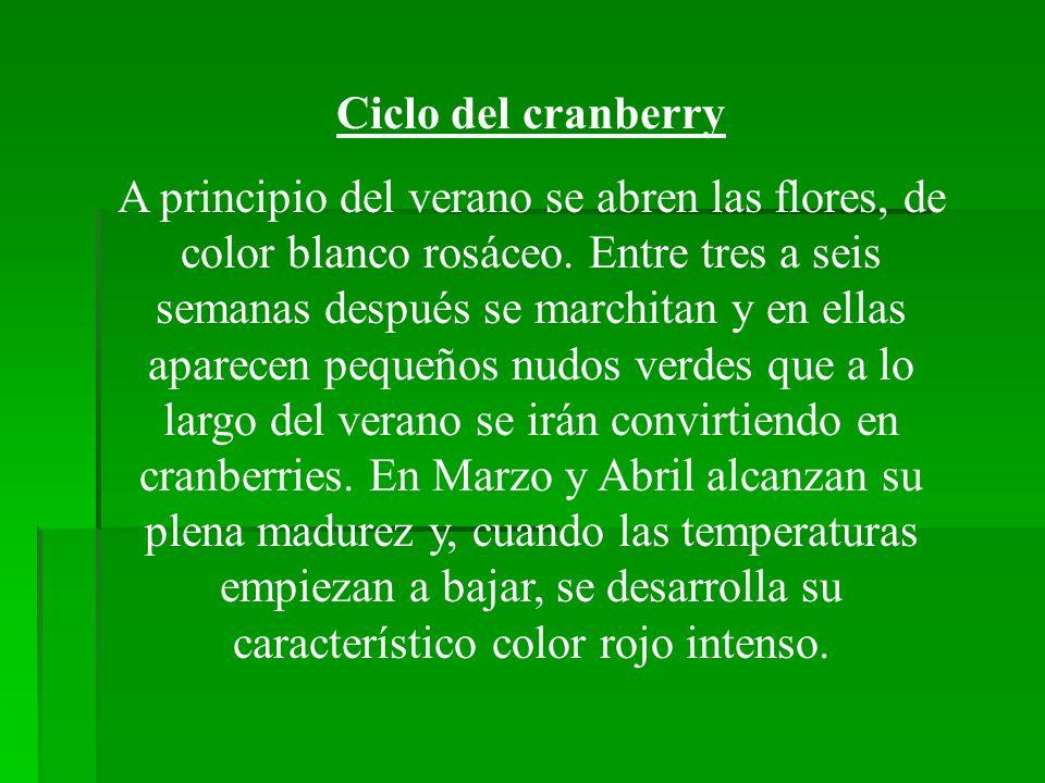 Ciclo del cranberry
