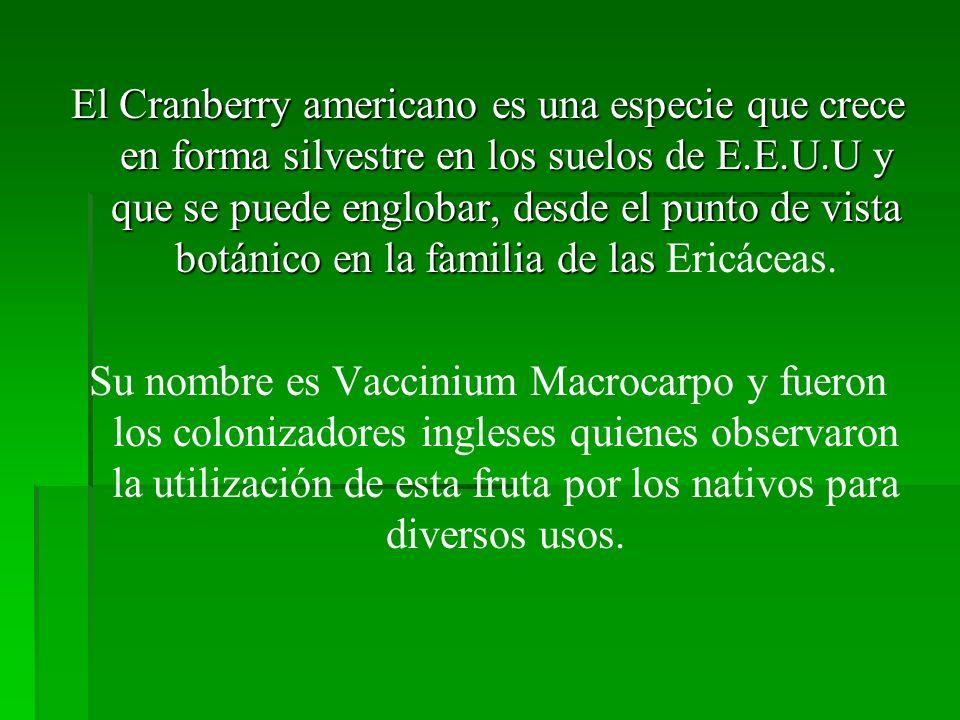El Cranberry americano es una especie que crece en forma silvestre en los suelos de E.E.U.U y que se puede englobar, desde el punto de vista botánico en la familia de las Ericáceas.