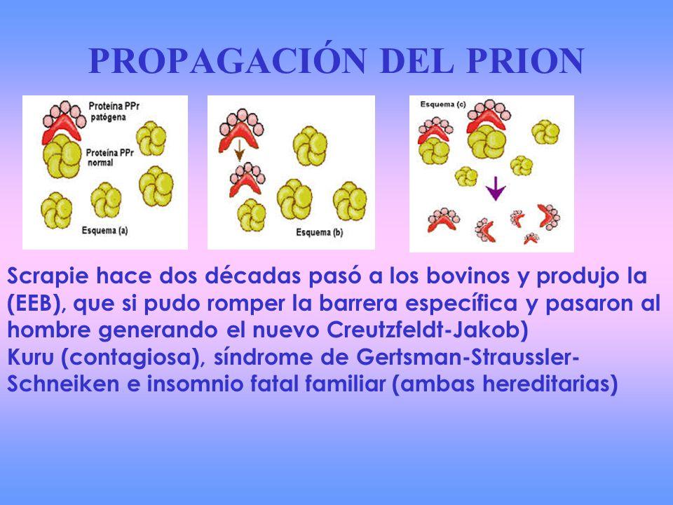 PROPAGACIÓN DEL PRION
