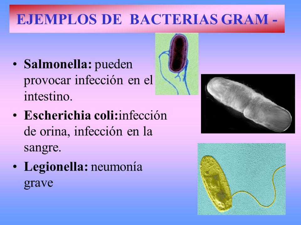 EJEMPLOS DE BACTERIAS GRAM -
