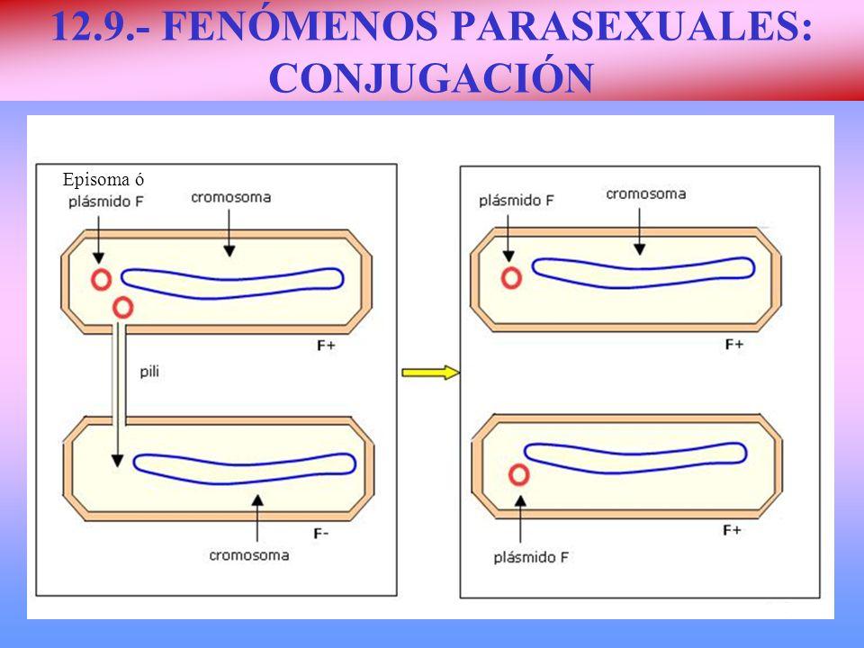 12.9.- FENÓMENOS PARASEXUALES: CONJUGACIÓN