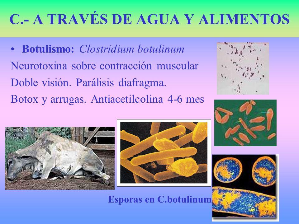 C.- A TRAVÉS DE AGUA Y ALIMENTOS