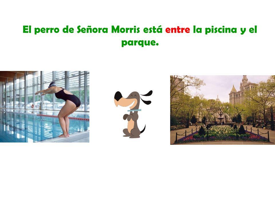 El perro de Señora Morris está entre la piscina y el parque.